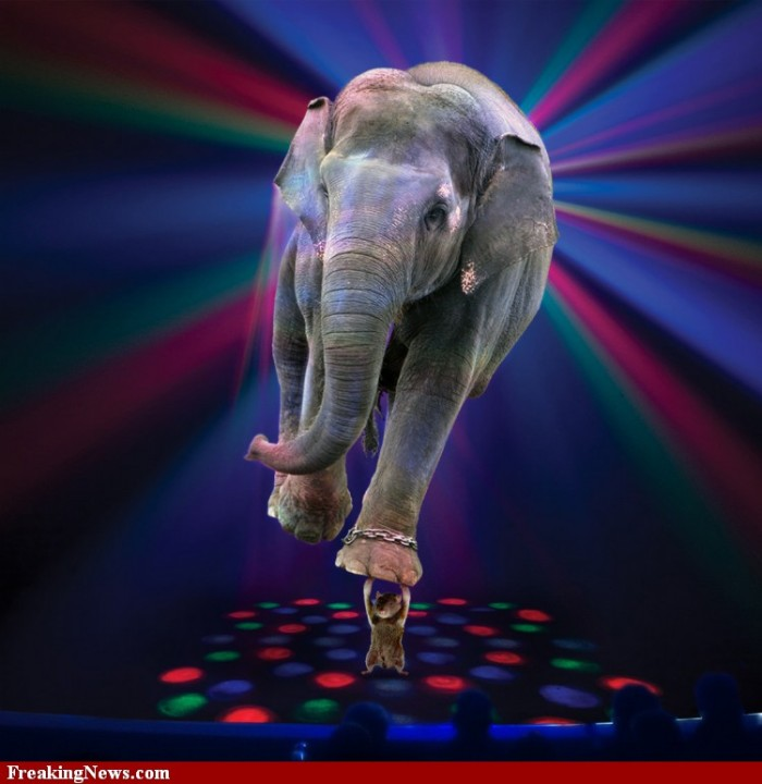 Cat-Holding-Up-an-Elephant-in-Circus--70984