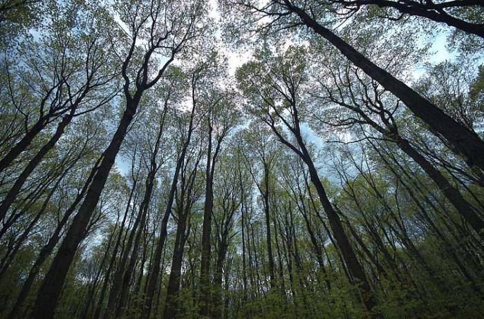 Forest v Trees