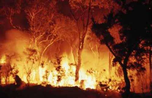 bushfire-720390