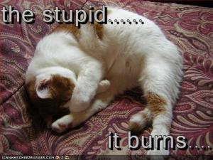 LOL-cat-stupid-burns