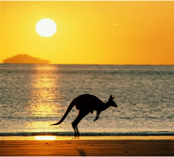 australia-kangaroo-jumping-sunset