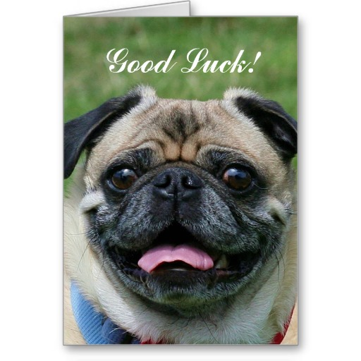 good_luck_pug_dog_card-r5019490c6ea24c7597ee659f24e1e527_xvuat_8byvr_512