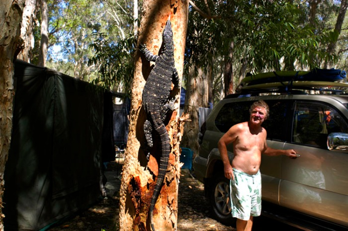 Lizard Tree 750