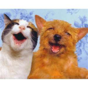 dog-and-cat-smiling