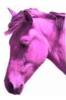 pink-horse