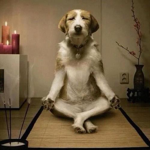 relax-dog_tumblr