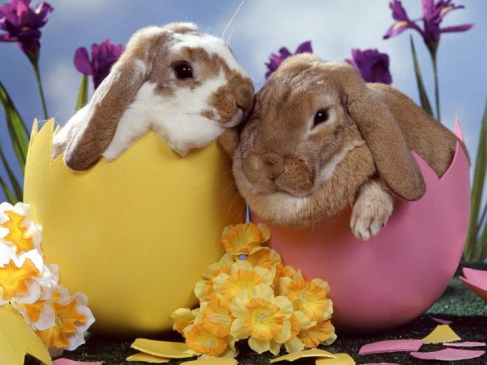 happy-easter-bunny.jpg