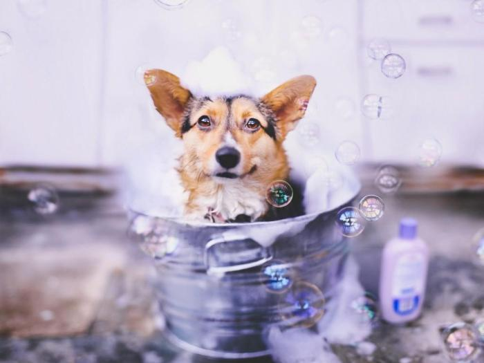 dog_bath_animals_bubbles_shampoo_pet_cute_hd-wallpaper-1354846.jpg