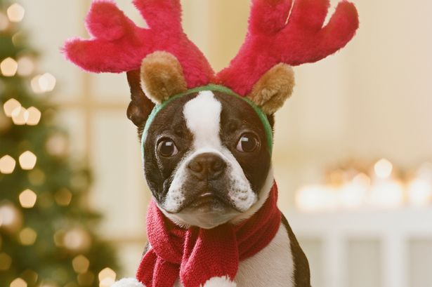 MAIN-Dog-in-christmas-costume.jpg